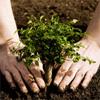 Haljastus ja aiahooldus