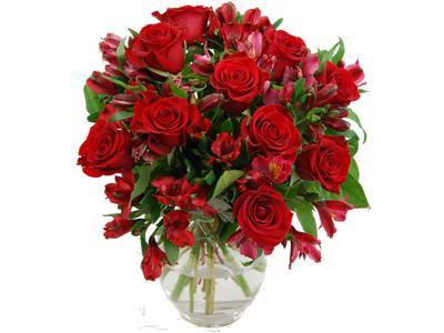 red-rosmeria-flowers-1