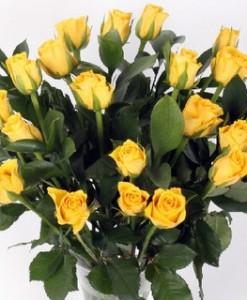 20_yellow_rose_large